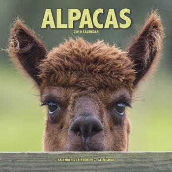Calendar 2019  Alpacas