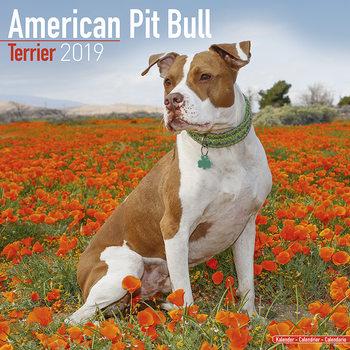 Calendar 2019  American Pit Bull Terrier
