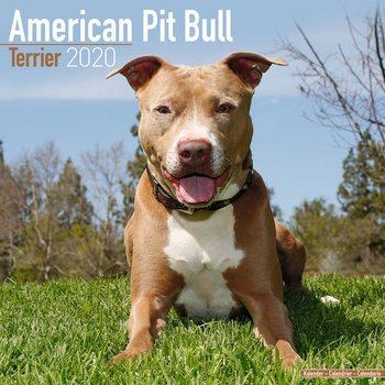 Calendar 2020  American Pit Bull Terrier