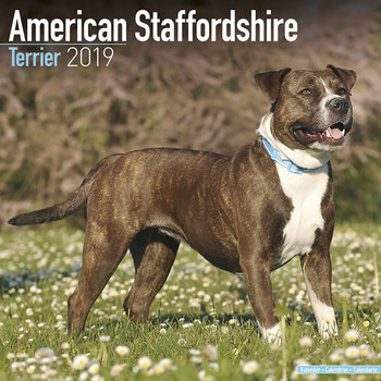 Calendar 2019  American Staffordshire Terrier