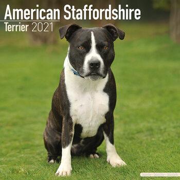 Calendar 2021 American Staffordshire Terrier