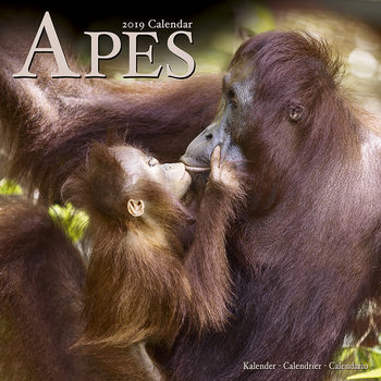 Calendar 2019  Apes