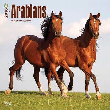 Calendar 2017 Arabians Horses