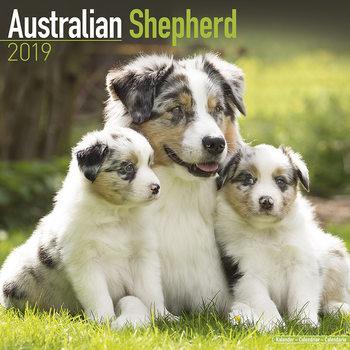 Calendar 2019  Australian Shepherd