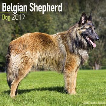 Calendar 2019  Belgian Shepherd Dog