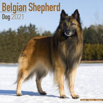 Calendar 2021 Belgian Shepherd Dog