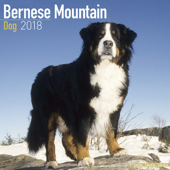 Calendar 2018 Bernese Mountain Dog