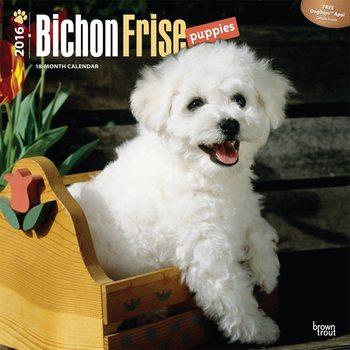 Calendar 2017 Bichon Frise Puppies