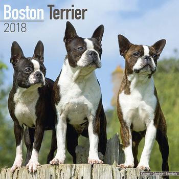 Calendar 2018 Boston Terrier