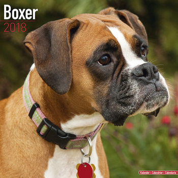 Calendar 2018 Boxer