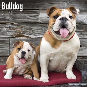 Calendar 2021 Bulldog