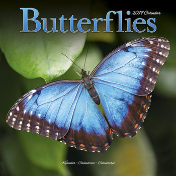 Calendar 2019  Butterflies
