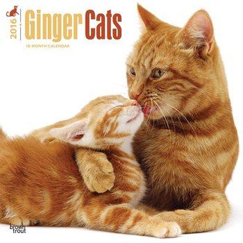 Calendar 2017 Cats 2