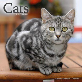 Calendar 2020  Cats