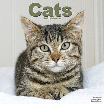 Calendar 2021 Cats