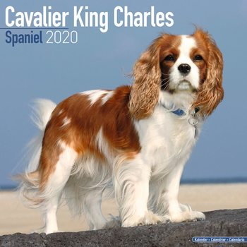 Calendar 2020  Cavalier King Charles