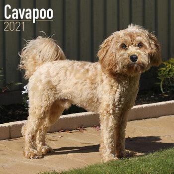 Calendar 2021 Cavapoo