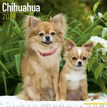 Calendar 2018 Chihuahua