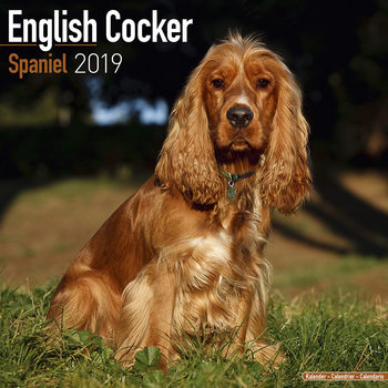 Calendar 2019  Cocker Spaniel
