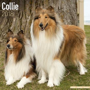 Calendar 2018 Collie