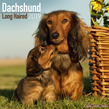 Calendar 2019  Dachshund