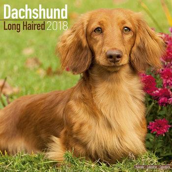 Calendar 2018 Dachshund (Longhaired)