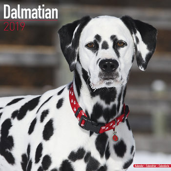 Calendar 2019  Dalmatian