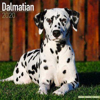 Calendar 2020  Dalmatian