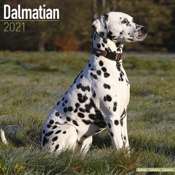 Calendar 2021 Dalmatian