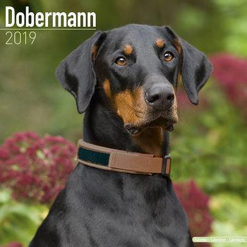 Calendar 2019  Dobermann (Euro)