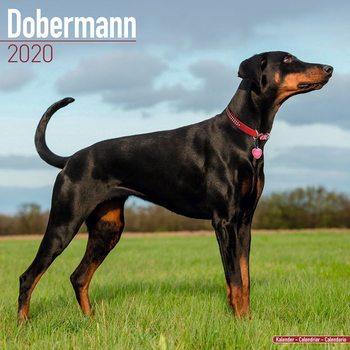 Calendar 2020  Dobermann