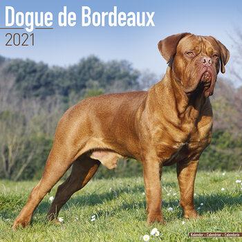 Calendar 2021 Dogue de Bordeaux