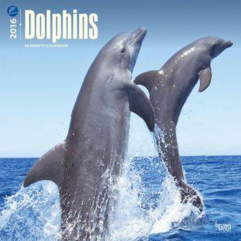 Calendar 2017 Dolphin