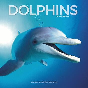 Calendar 2021 Dolphins