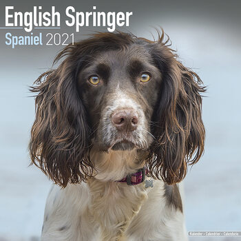 Calendar 2021 Eng Springer Spaniel