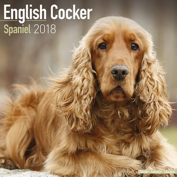 Calendar 2018 English Cocker Spaniel