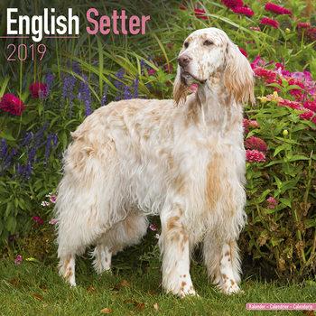 Calendar 2019  English Setter