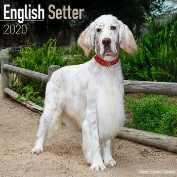 Calendar 2020  English Setter