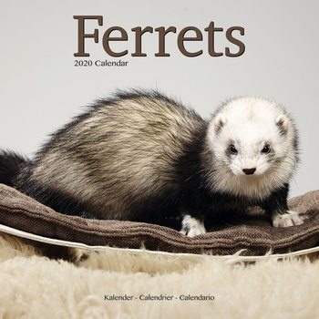Calendar 2020  Ferrets