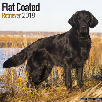 Calendar 2018 Flat Coated Retriever