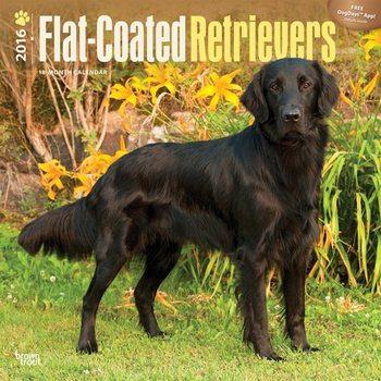 Calendar 2017 Flat-Coated Retrievers