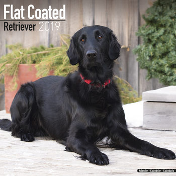 Calendar 2019  Flatcoated Retriever