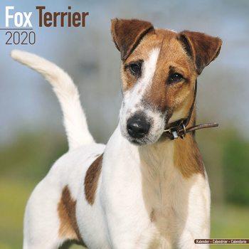 Calendar 2020  Fox Terrier