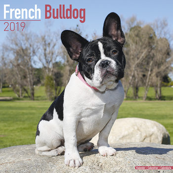 Calendar 2019  French Bulldog