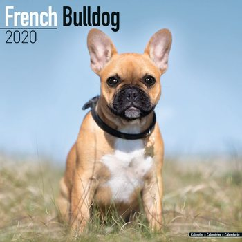 Calendar 2020  French Bulldog