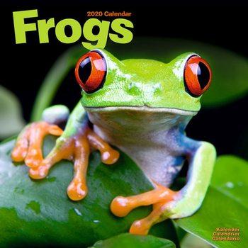 Calendar 2020  Frogs