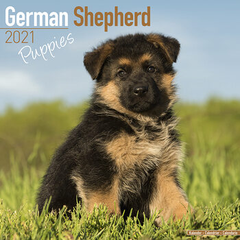 Calendar 2021 German Shepherd