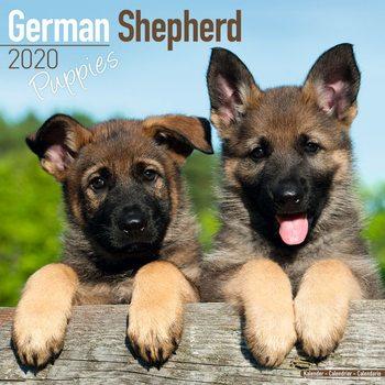 Calendar 2020  German Shepherd Puppies