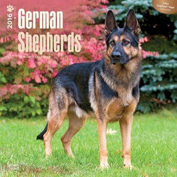 Calendar 2017 German Shepherds