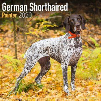 Calendar 2020  German ShortHair Pointer